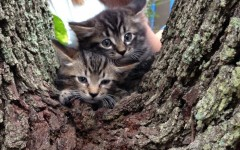 Students find kittens on campus