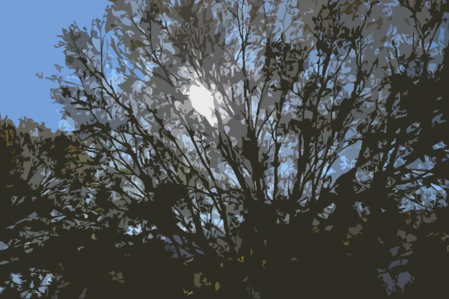 Prisoners hope to see things like this tree during Spring Break.