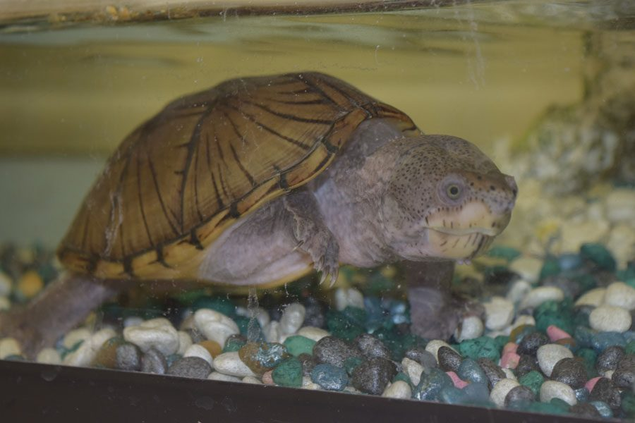 Vinny the turtle, who lived in Mrs. Copello's classroom, is an example of a pet.  Your pet can help you relieve stress according to Psychology Today.