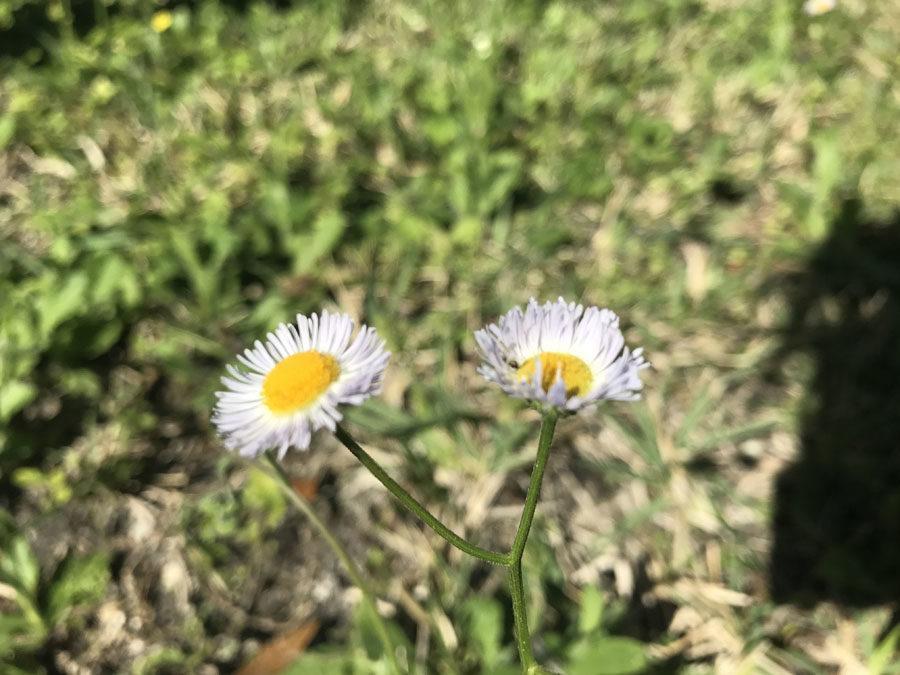flowerpicJZ