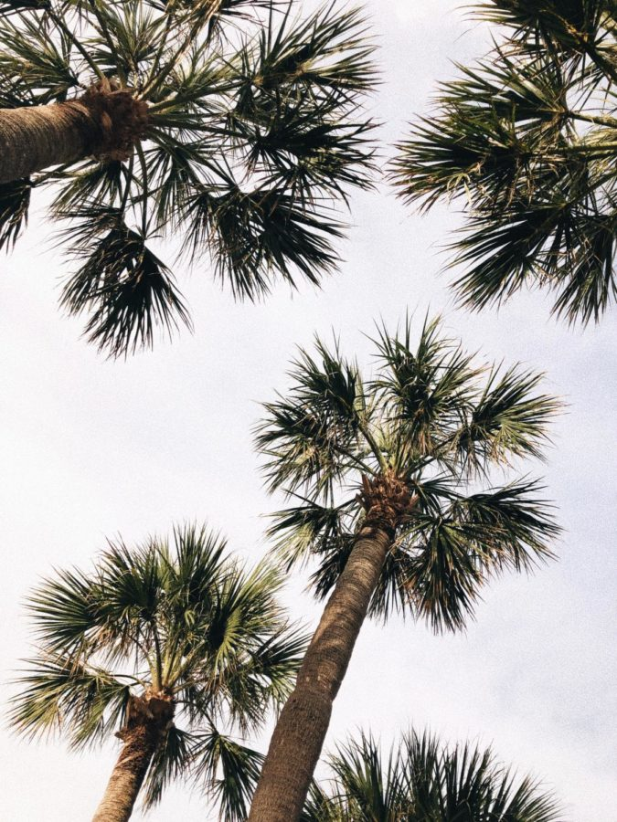 Hanging out under the palms could be a good way to spend summer.